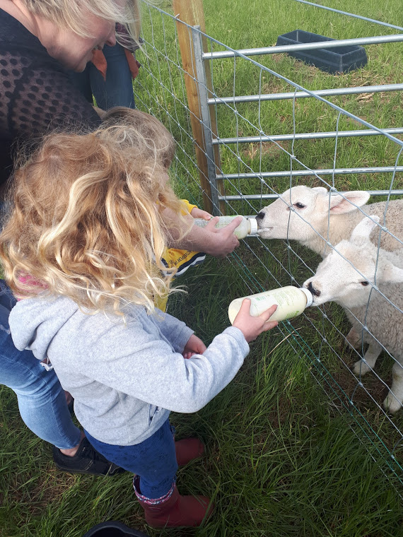 Byres Farm - Fun Farm feeding the lambs